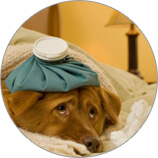 вред блох для домашних животных