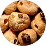 уничтожение зерновой кожеед
