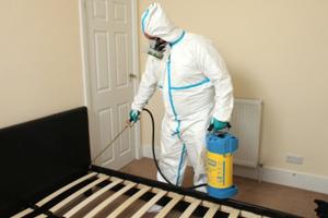 Уничтожение постельных клопов: как подготовить квартиру