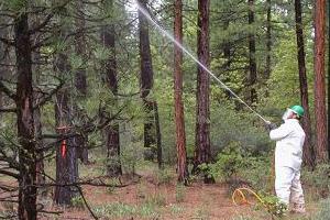 Заказать обработку леса