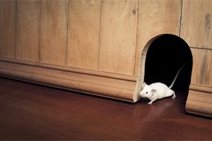 Уничтожение мышей на даче