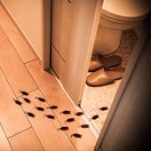 Тараканы в квартире как избавиться