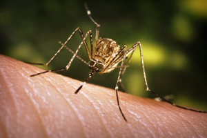 Борьба с комарами в квартире