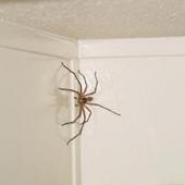мини пауки
