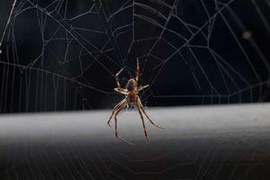 Причины появления домашних пауков
