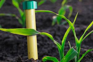 Способы борьбы с землеройкой
