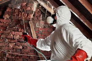 обработка жилища в борьбе с блохами в домах