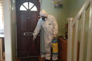 уничтожение блох в домашних условиях